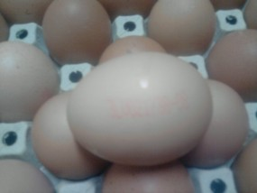 jaja komsumcyjne i produkcyjne